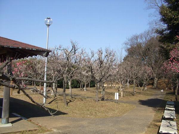 印旛沼公園・梅園
