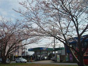 20100403.フォト日記(国道124号の桜)-1
