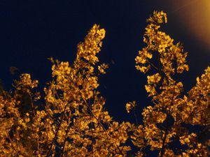 20100410.フォト日記(夜桜なう)