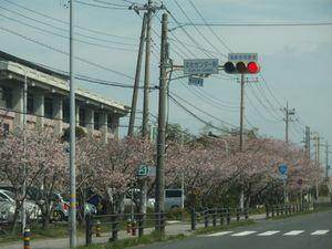 20100403.フォト日記(国道124号の桜)-2