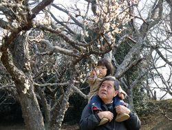 【印旛沼公園】梅園②